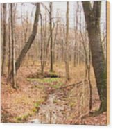 Brook In The Woods Wood Print