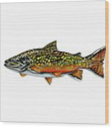 Brook Trout Wood Print by Jim  Romeo