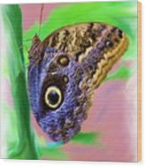 Brown And Blue Butterfly 2 Wood Print