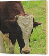 Brown And White Bull On A Farm Wood Print