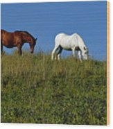 Brown And White Horse Grazing Together In A Grassy Field Wood Print