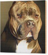 Brown And White Pit Bull By Spano Wood Print by Michael Spano