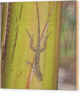 Brown Anole Wood Print