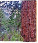 Brown Bark Wood Print