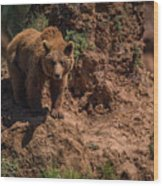 Brown Bear Watches From Steep Rocky Outcrop Wood Print