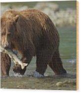 Brown Bear With Salmon Wood Print