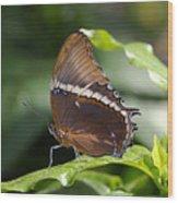 Brown Beauty Wood Print