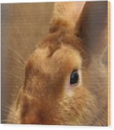 Brown Bunny And Whisker's Closeup Wood Print
