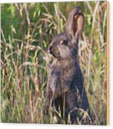 Brown Bunny Wood Print