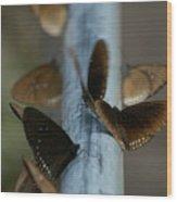 Brown Butterflies Wood Print