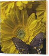 Brown Butterfly On Yellow Daisies  Wood Print