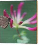 Brown Butterfly Resting On The Pink Plant Wood Print