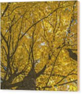 Brown County Colors Wood Print