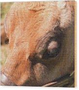 Brown Cow 2 Wood Print