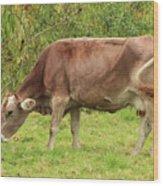Brown Cow Grazing Wood Print