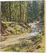 Brown Dirty Road Under Spring Sun Rays Wood Print