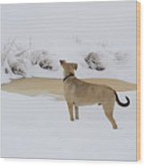 Brown Dog In The Snow Wood Print