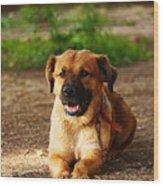 Brown Dog Lying Wood Print