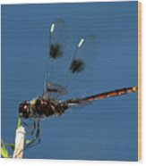Brown Dragonfly Hanging On Wood Print