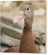 Brown Duck Portrait Wood Print