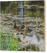Brown Ducks On Log Wood Print