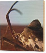Brown-eyed Bug Wood Print