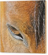 Brown-eyed Wild Horse Wood Print
