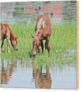 Brown Horse And Foal Nature Spring Scene Wood Print