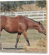 Brown Horse Eating Hay Ranch Scene Wood Print