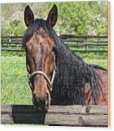 Brown Horse In A Corral Wood Print