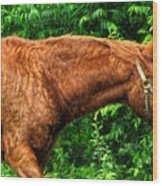 Brown Horse In High Definition Wood Print