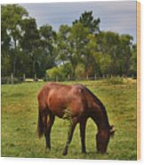 Brown Horse In Holland Wood Print