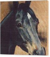 Brown Horse  Tingeys Star Wood Print