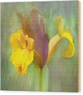 Brown Iris Wood Print