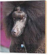 Brown Medium Poodle Wood Print