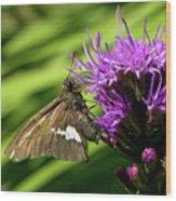 Brown Moth On Pink Wood Print