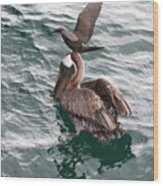 Brown Noddy Atop Pelican Scouts Dinner Wood Print