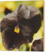 Brown Pansy Wood Print