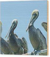 Brown Pelican 4 Wood Print