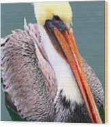 Brown Pelican . 7d8291 Wood Print