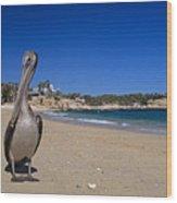 Brown Pelican At The Baja Wood Print