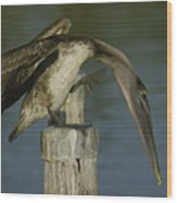 Brown Pelican At The Dock Of The Bay Wood Print