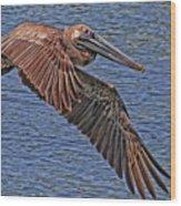 Brown Pelican Flyby Wood Print