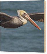 Brown Pelican Flying By Wood Print