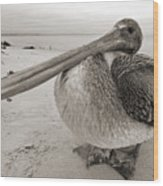 Brown Pelican Folly Beach Morris Island Lighthouse Close Up Wood Print by Dustin K Ryan