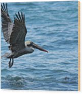 Brown Pelican In Flight Over Water Wood Print