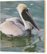 Brown Pelican In The Bay Wood Print