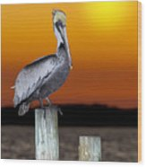 Brown Pelican Wood Print