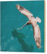 Brown Pelican Offshore Wood Print