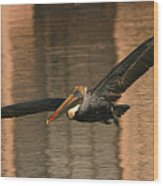 Brown Pelican On A Sunset Flyby Wood Print